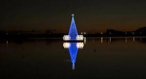 albero lago Miseno