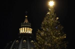albero piazza san Pietro